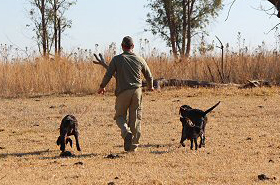 gundog-training07