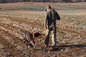gundog-training13