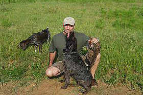 gundog-training20