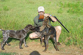gundog-training21