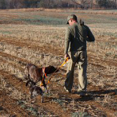 nav-gundog-training