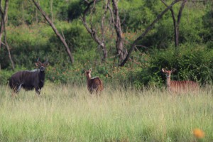 umkomaas-valley-game-viewing-002