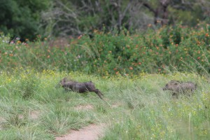 umkomaas-valley-game-viewing-004